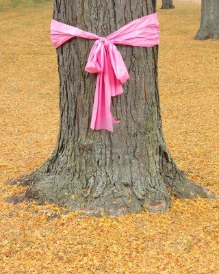 8753951-pink-ribbon-for-october-breast-cancer-awareness-month-tied-around-the-trunk-of-an-oak-tree