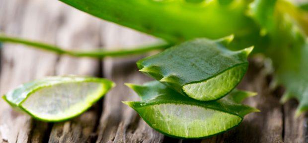 Aloe-