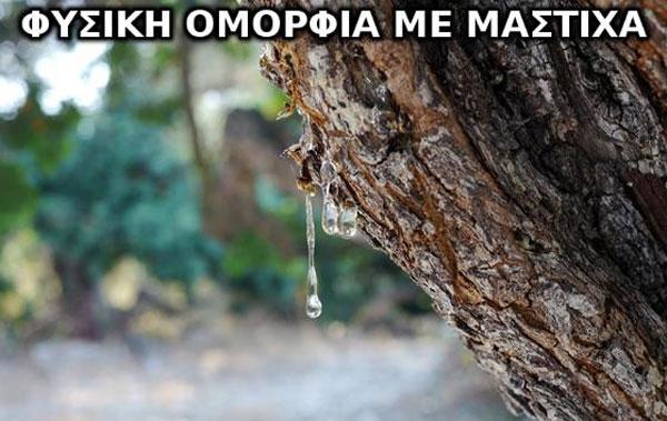 MASTIHA-OPEN