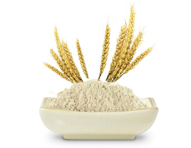 Rice-Protein1