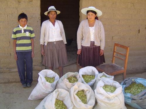 incas-gardenia