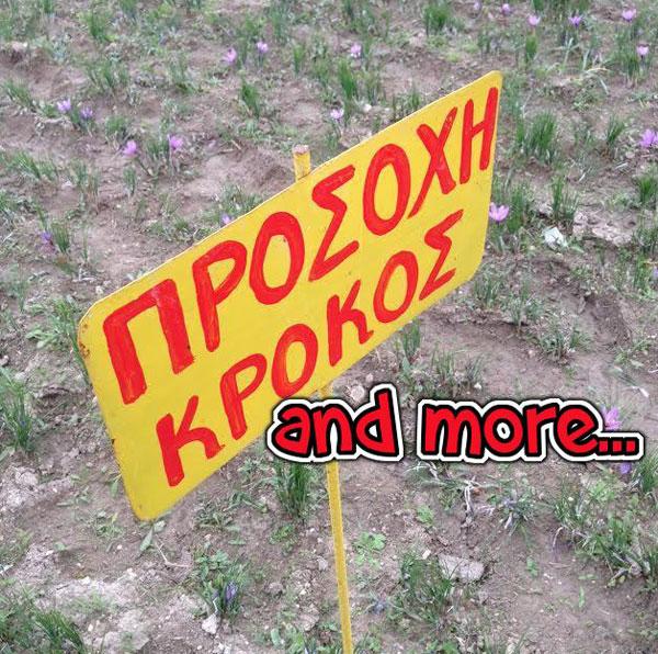 korres-krokos-open