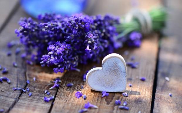 lavender-open