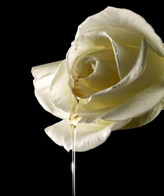 "beautyexpert  millenium rose Να τι θέλω!!!!: Kerastase Eixir Ultime ""Grands Crus!"""