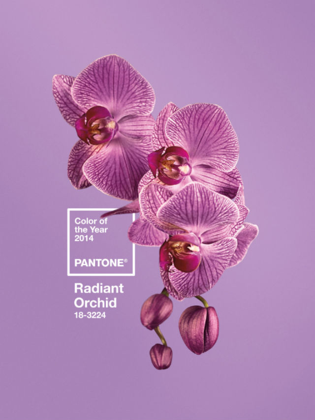 radiant-orchid-pantone