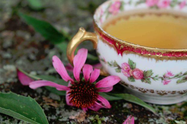 tea-echinacea