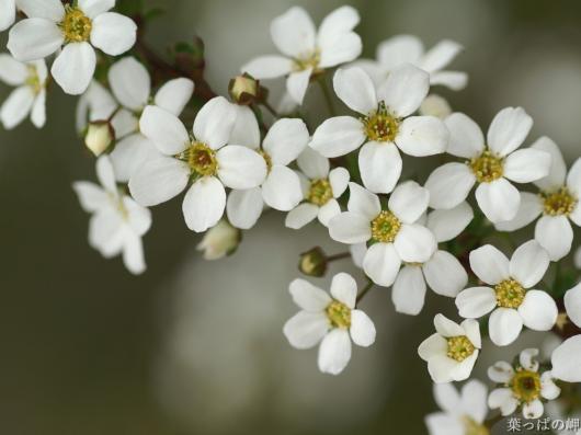 beautyexpert  white flowers Αρωματικές Αναζητήσεις…